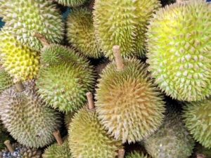 singapore-durian-fruit