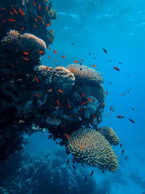 reef-st-kitts
