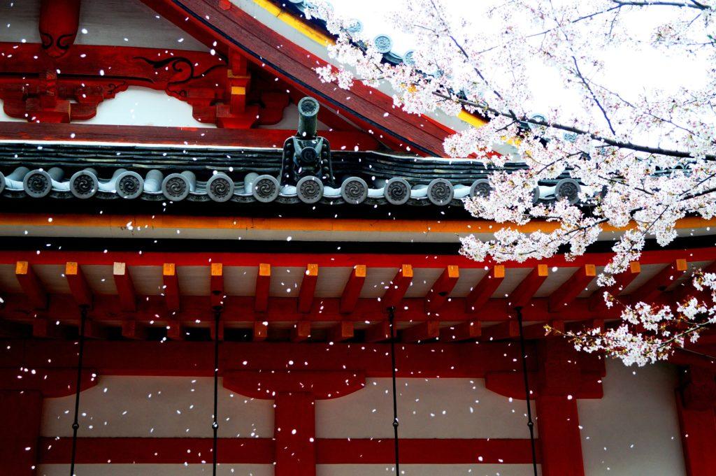 spring-sakura-cherry-blossom